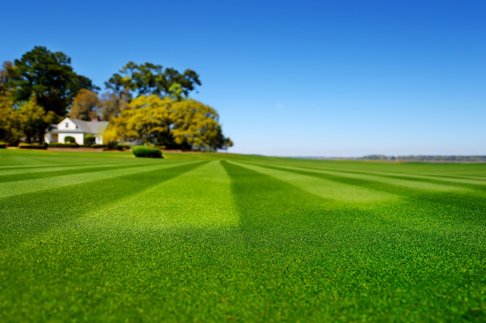 A well maintained country house lawn