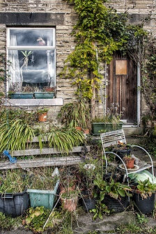 An untidy garden needing care and attention